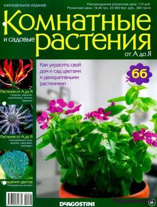 Комнатные и садовые растения от А до Я 66 15