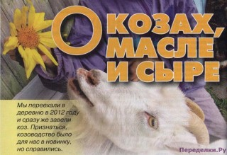 О козах масле и сыре