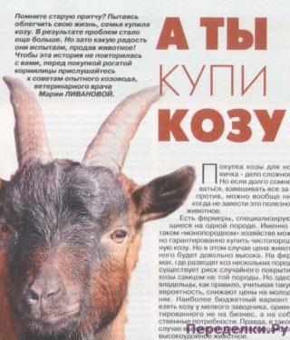 А ты купи козу