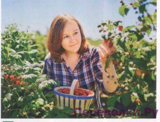 Два урожая ягод за один сезон