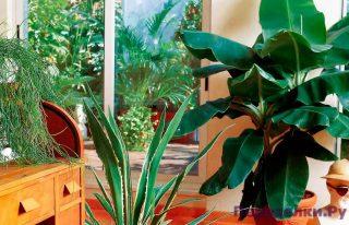 Зелень в жилище холостяка