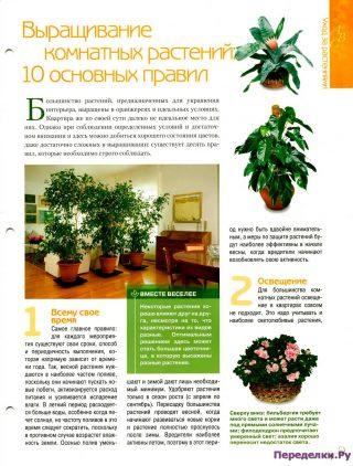 Выращивание комнатных растений 10 основных правил