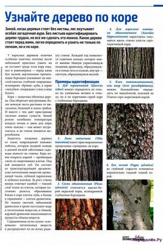 Узнайте дерево по коре