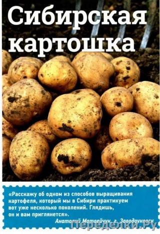 59 Сибирская картошка_cr