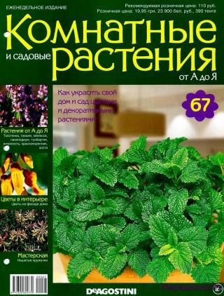 Комнатные и садовые растения от А до Я 67 15