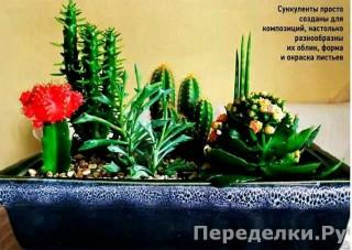26 Мини_садики из суккулентов