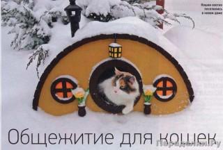 35 Общежитие для кошек