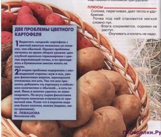 Альтернативная посадка картофеля