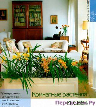 Комнатные растения и свет