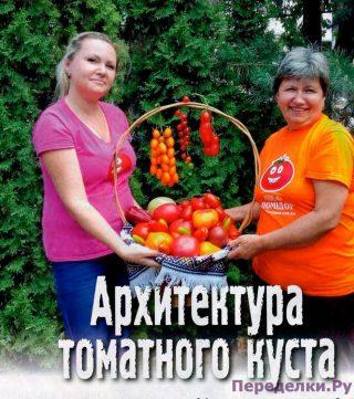 Архитектура томатного куста