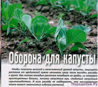 Оборона для капусты