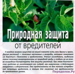 Природная защита от вредителей