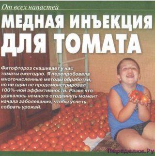 Медная инъекция для томата