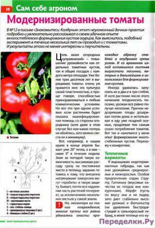 Модернизированные томаты