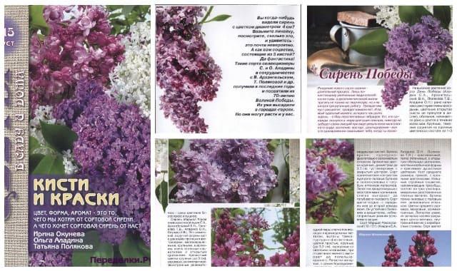 Cvety v sadu i doma 8 2015