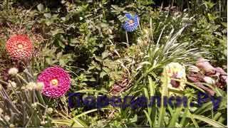 Большие цветы для сада 3 часть