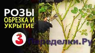 ЧТОБЫ ВАШИ РОЗЫ ОБИЛЬНО ЦВЕЛИ ВЕСНОЙ правильная обрезка и укрытие роз на зиму