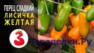 ПЕРЕЦ ЛИСИЧКА ЖЕЛТАЯ обилие сахарных миниатюрных плодов