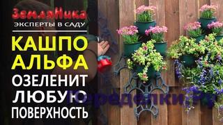 Создайте свою фитостену. Удобно монтировать дома, на балконе, в саду