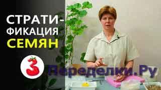 Способы СТРАТИФИКАЦИИ СЕМЯН для подготовки к посеву