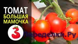 ТОМАТ ГАСПАЧО хорош для томатного супа и пасты