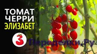 ТОМАТ ЧЕРРИ ЭЛИЗАБЕТ F1 удивительный вкус, колоссальный урожай