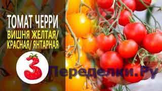 ТОМАТ ЧЕРРИ ВИШНЯ самые сладкие томаты