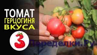 ТОМАТ ГЕРЦОГИНЯ ВКУСА F1 ну очень вкусный томат