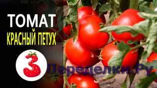 ТОМАТ КРАСНЫЙ ПЕТУХ ультраранний ,крупные вкусные плоды
