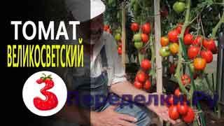 ТОМАТ ВЕЛИКОСВЕТСКИЙ F1 раннеспелый гибрид, обильный урожай
