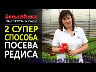 Урожай редиса на 3 неделю. Как посеять редиску