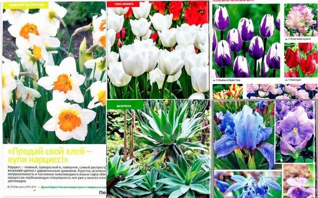 Ljublju cvety 4 aprel 2019