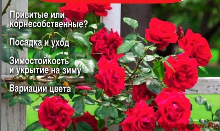Журнал Сад, огород - кормилец и лекарь №4 апрель 2019