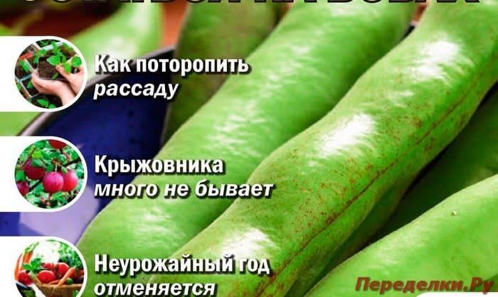 Журнал Сад, огород - кормилец и лекарь №7 апрель 2019