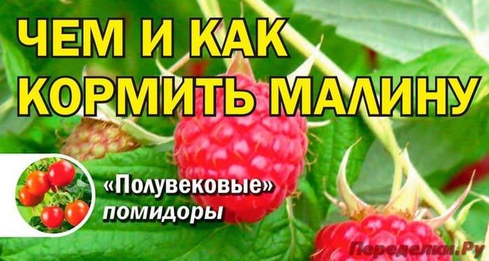 Журнал Сад, огород - кормилец и лекарь №8 апрель 2019
