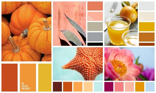Sochetanie oranzhevogo cveta 3
