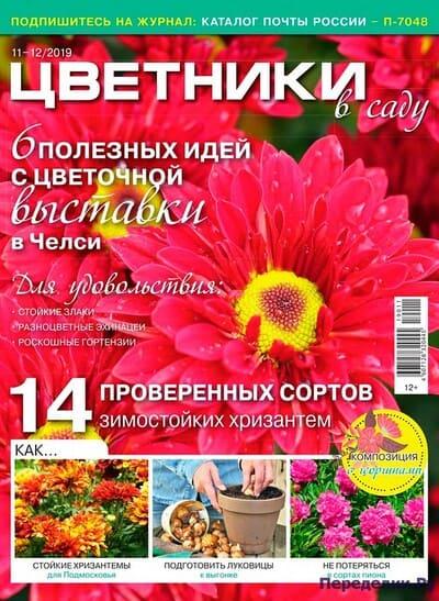 czvetniki v sadu 11 noyabr 2019