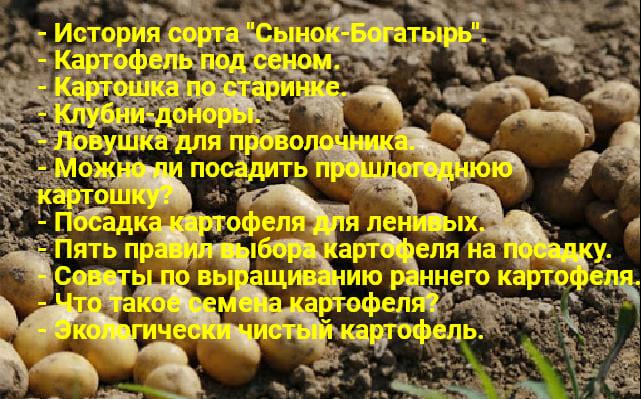 Kartofel 1