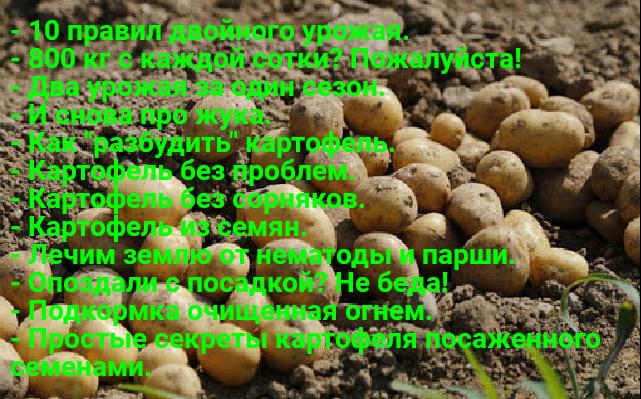Kartofel 2