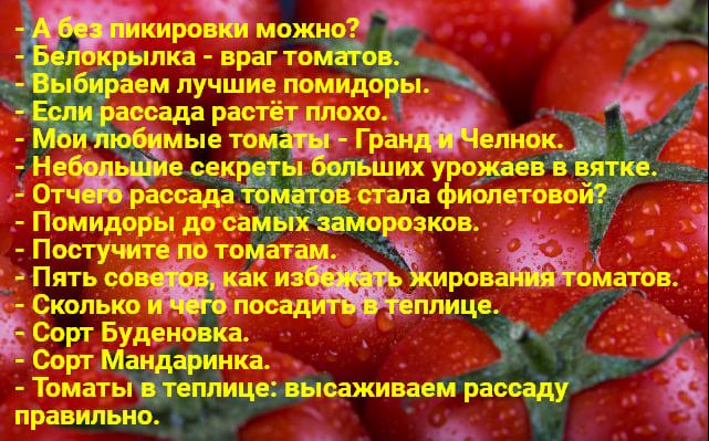 Tomaty 1