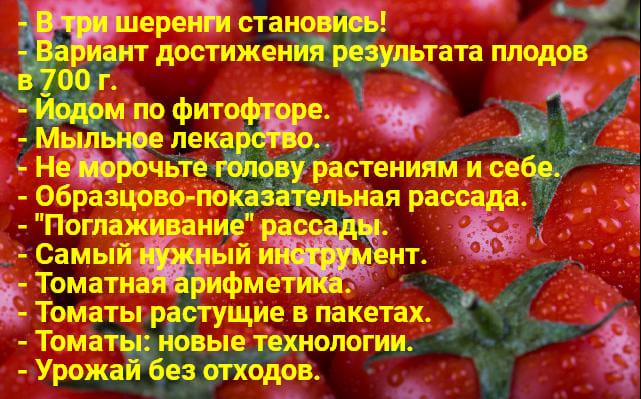Tomaty 3
