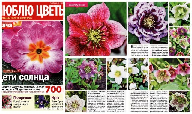Ljublju cvety 3 mart 2020