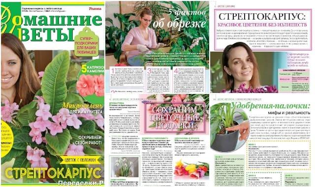 Domashnie cvety 3 mart 2020 33